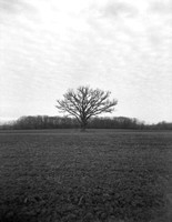 Indiana farm field after harvest. Holga camera